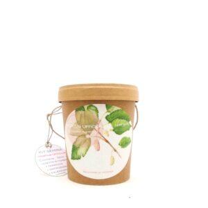 Un kit di semina in un barattolo di cartone con i semi di gelso